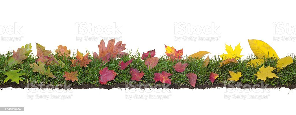 Fall green red and yellow leaves on grass with roots royalty-free stock photo