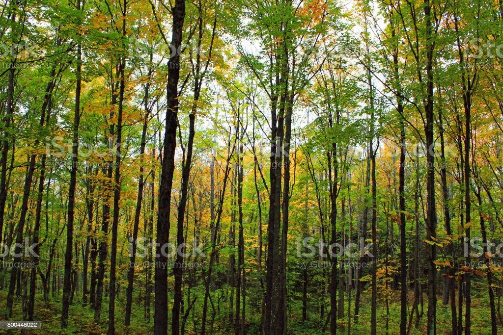 Fall grove stock photo