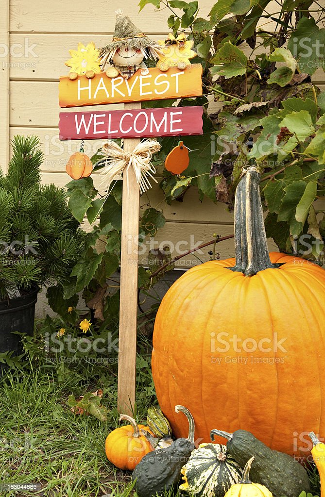 Fall Harvest display with pumpkin stock photo