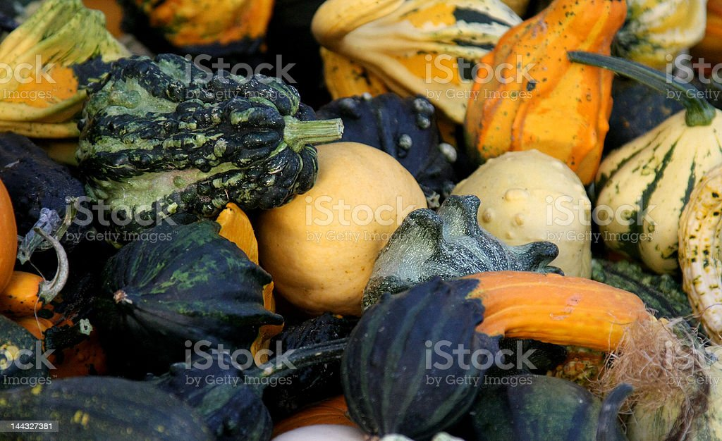 Fall harvest gourds royalty-free stock photo
