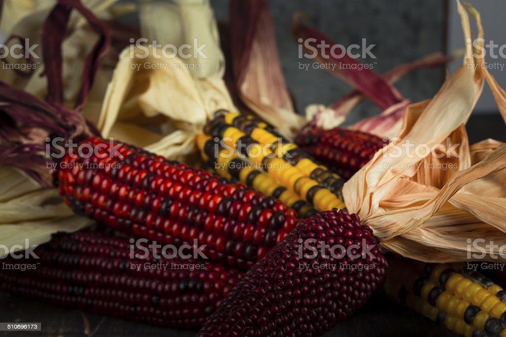 Fall Harvest Of Indian Corn stock photo