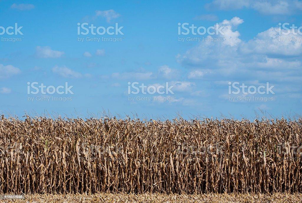 Fall Harvest stock photo