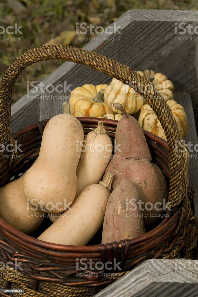Fall Harvest Series royalty-free stock photo