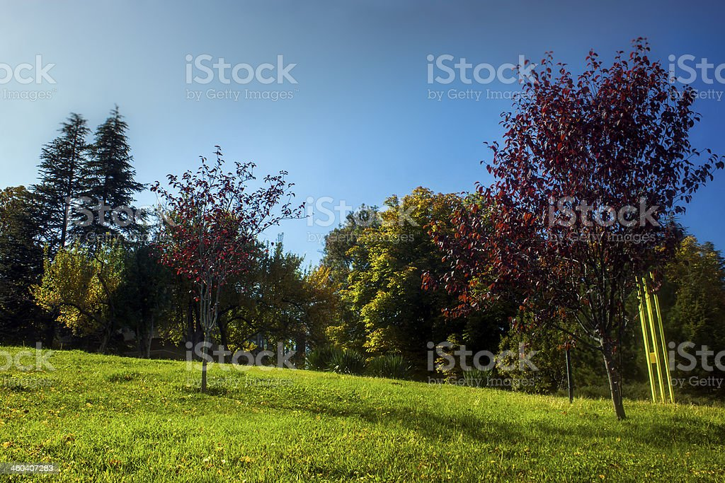 Fall in a Campus royalty-free stock photo