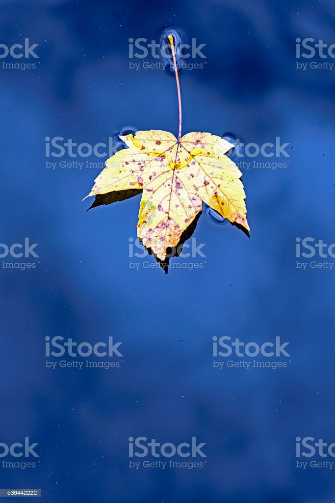Fall in Bavarian Forest stock photo