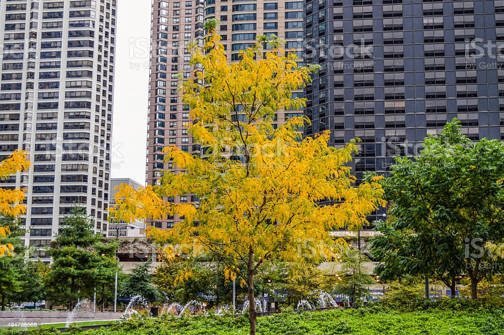 Fall in Chicago stock photo