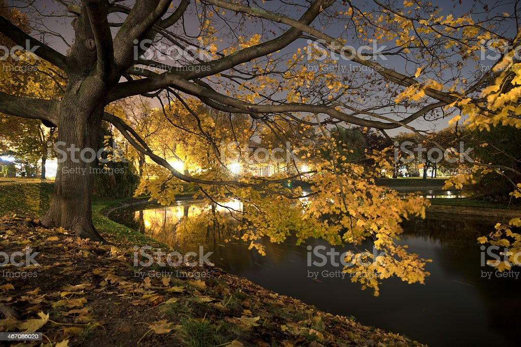 Fall In Dresden royalty-free stock photo