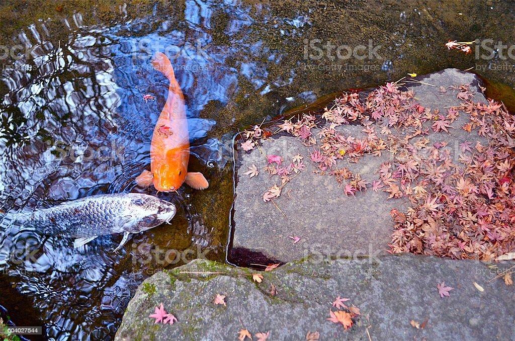 fall in Japan stock photo