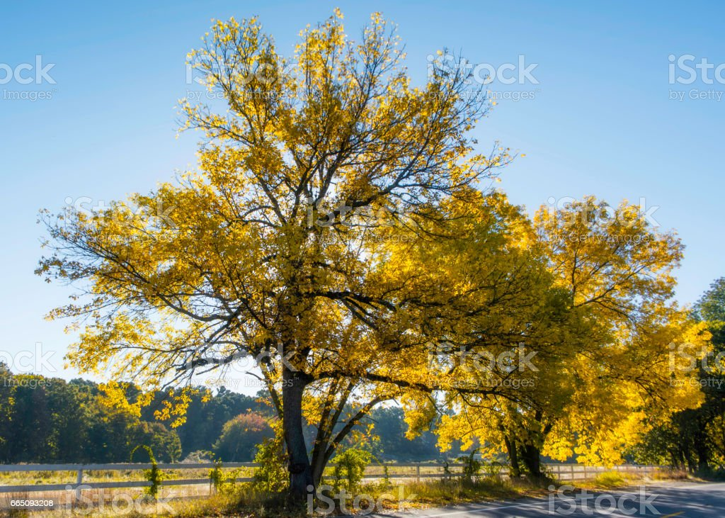 Fall In New England stock photo