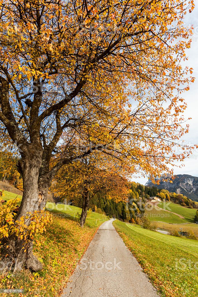 Fall in Odle stock photo
