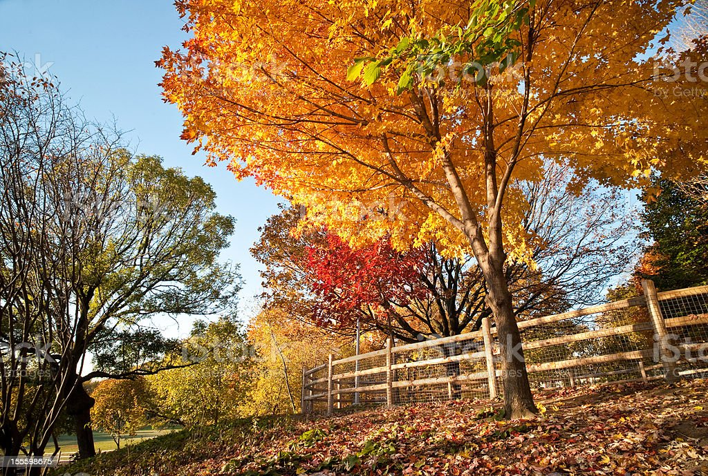 Fall in Ontario royalty-free stock photo