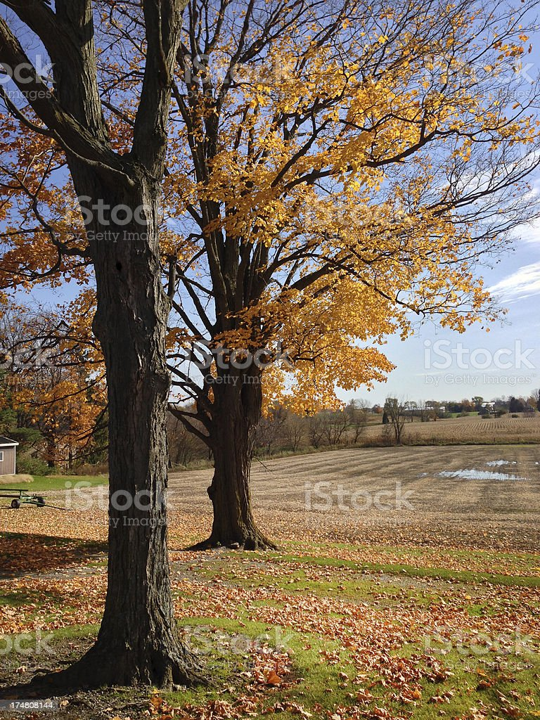 Fall in Ontario royalty-free stock photo