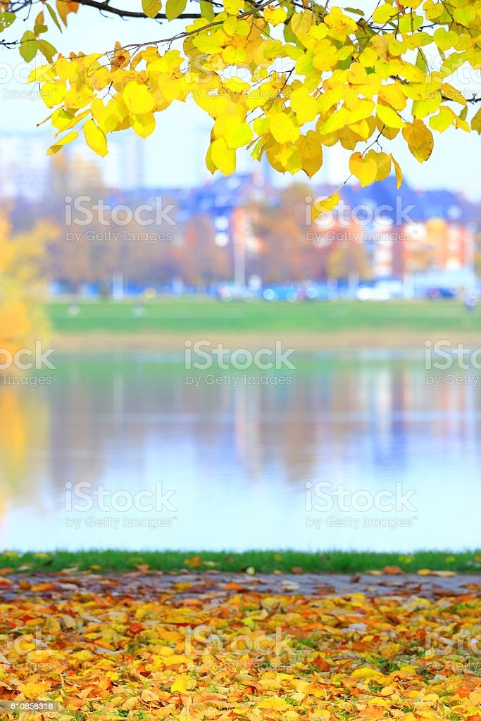 Fall in park stock photo