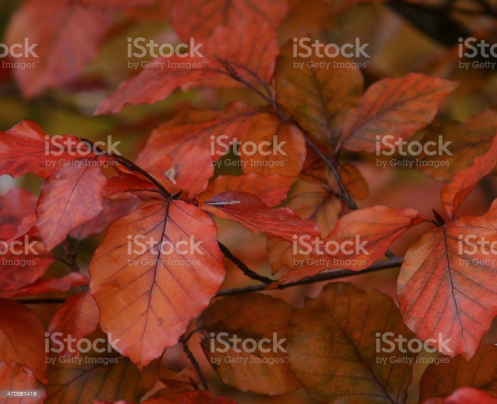 Fall in Switzerland stock photo