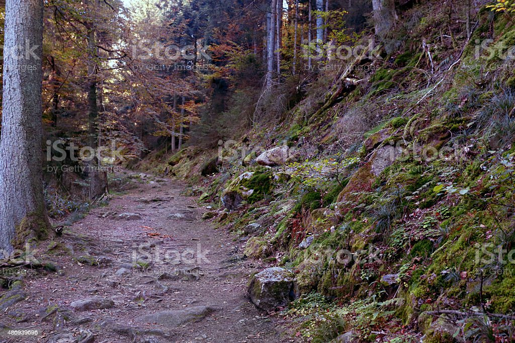 Fall in the Black Forest stock photo