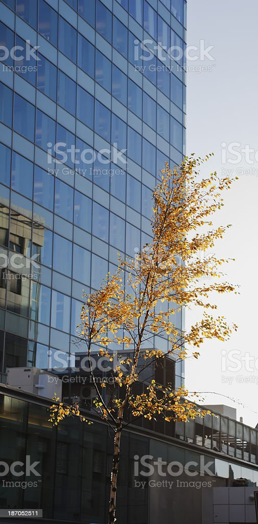 Fall in the city. royalty-free stock photo