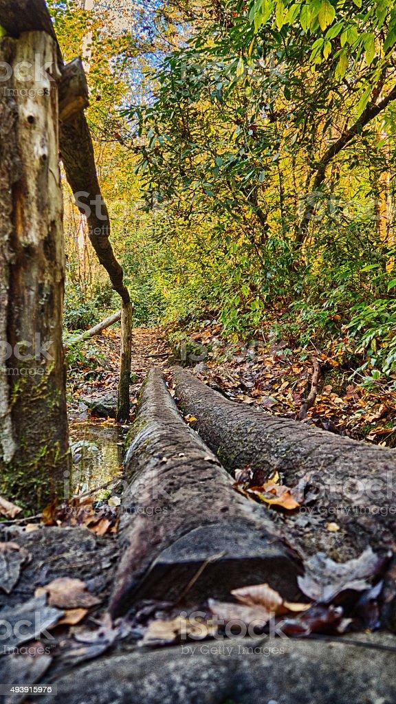 Autunno nella foresta foto stock royalty-free