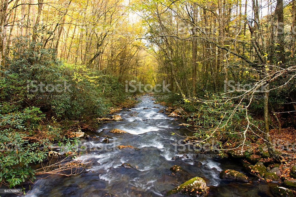 Fall in the forest royalty-free stock photo