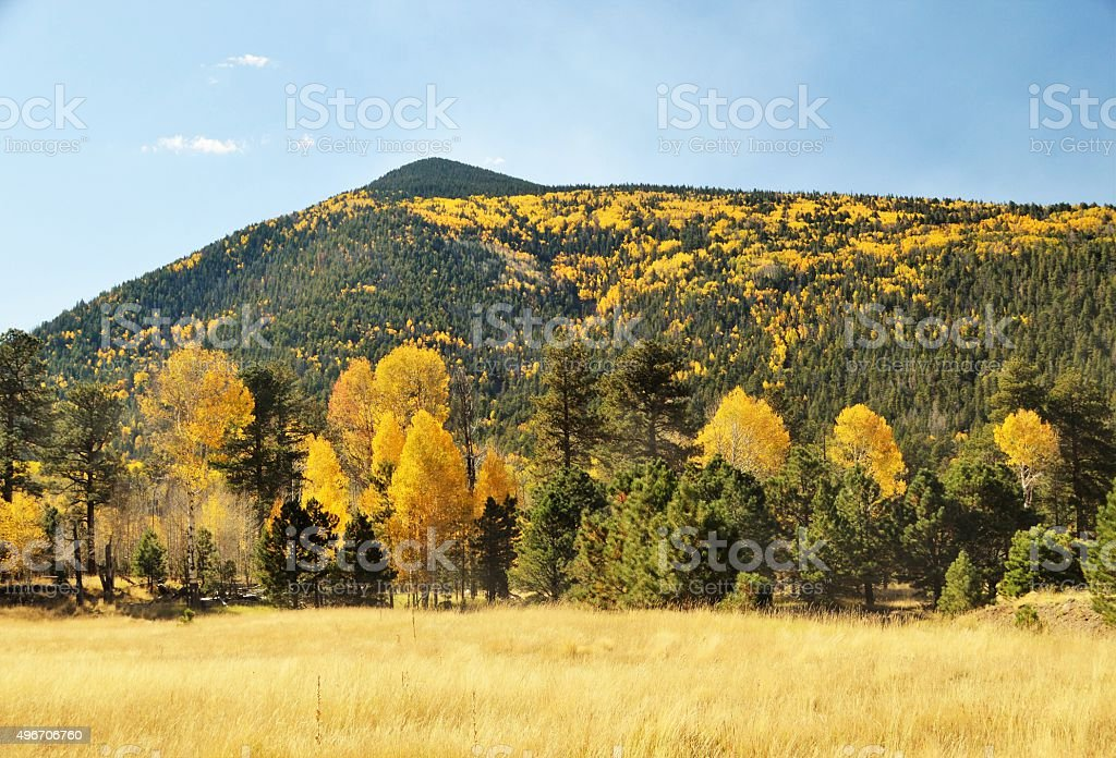 Fall in the mountains of northern Arizona stock photo