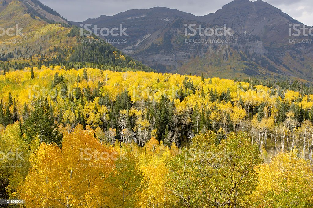 Fall In The Mountains of Utah royalty-free stock photo