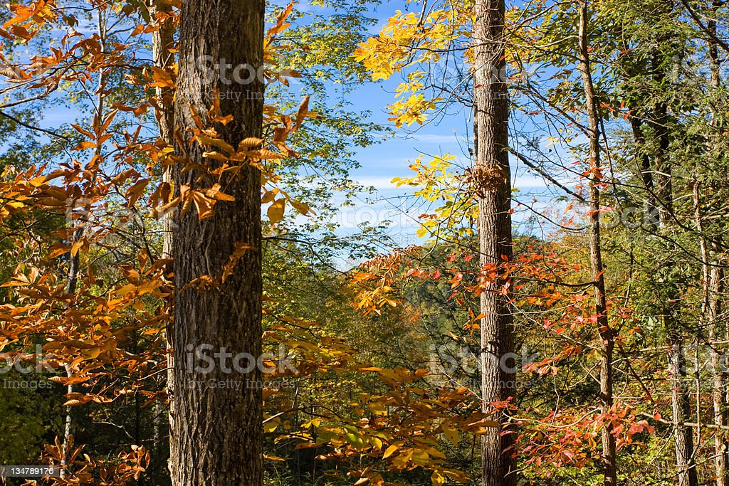 Fall in the nature royalty-free stock photo
