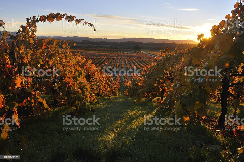 Fall in Wine Country stock photo