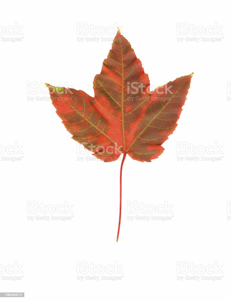 Fall is Coming royalty-free stock photo