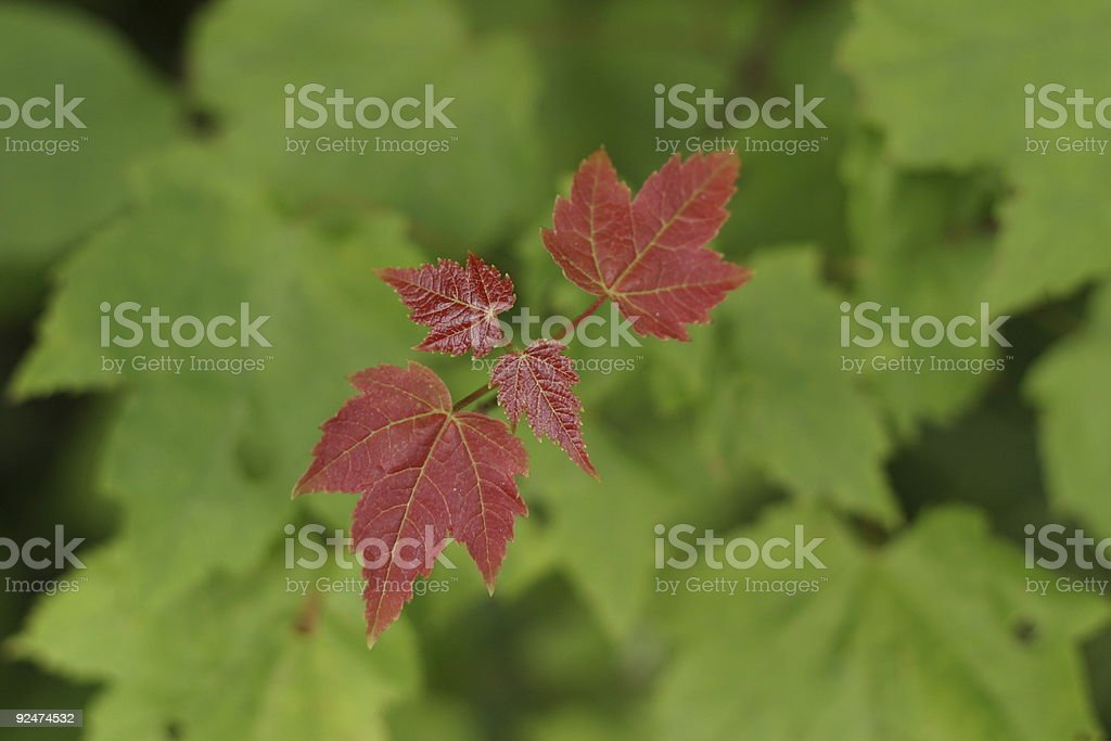 Fall is coming soon stock photo