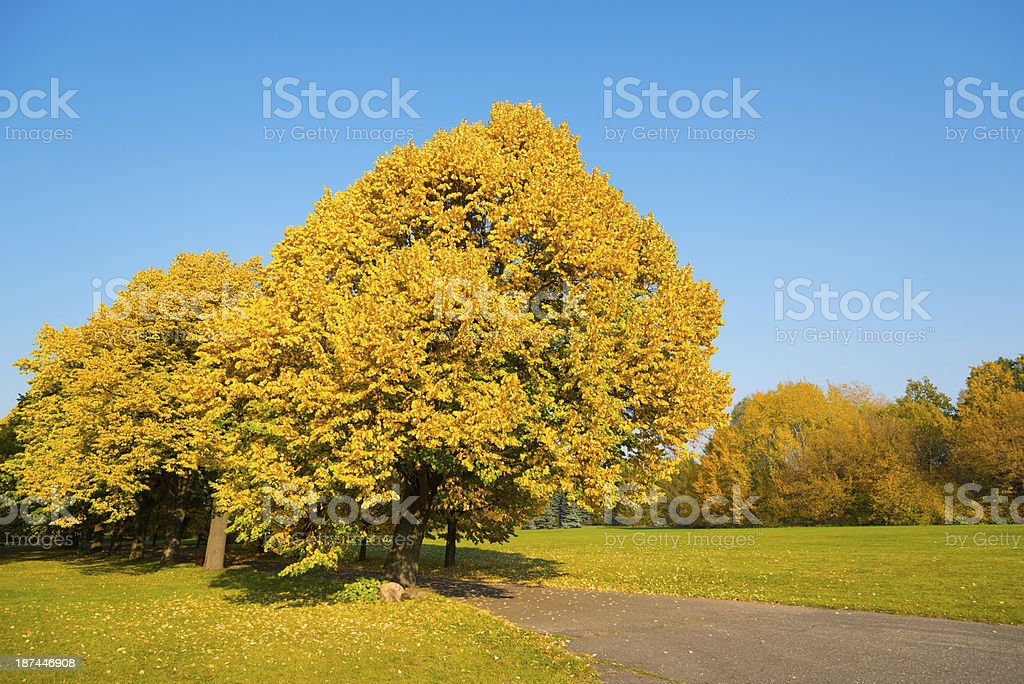 Fall Landscape - 36 Mpx royalty-free stock photo