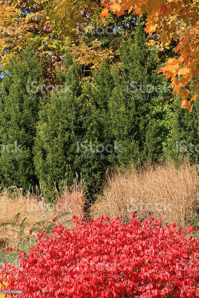 Fall Landscape stock photo