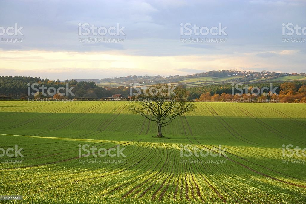 Fall landscape with lone tree in focus royalty-free stock photo