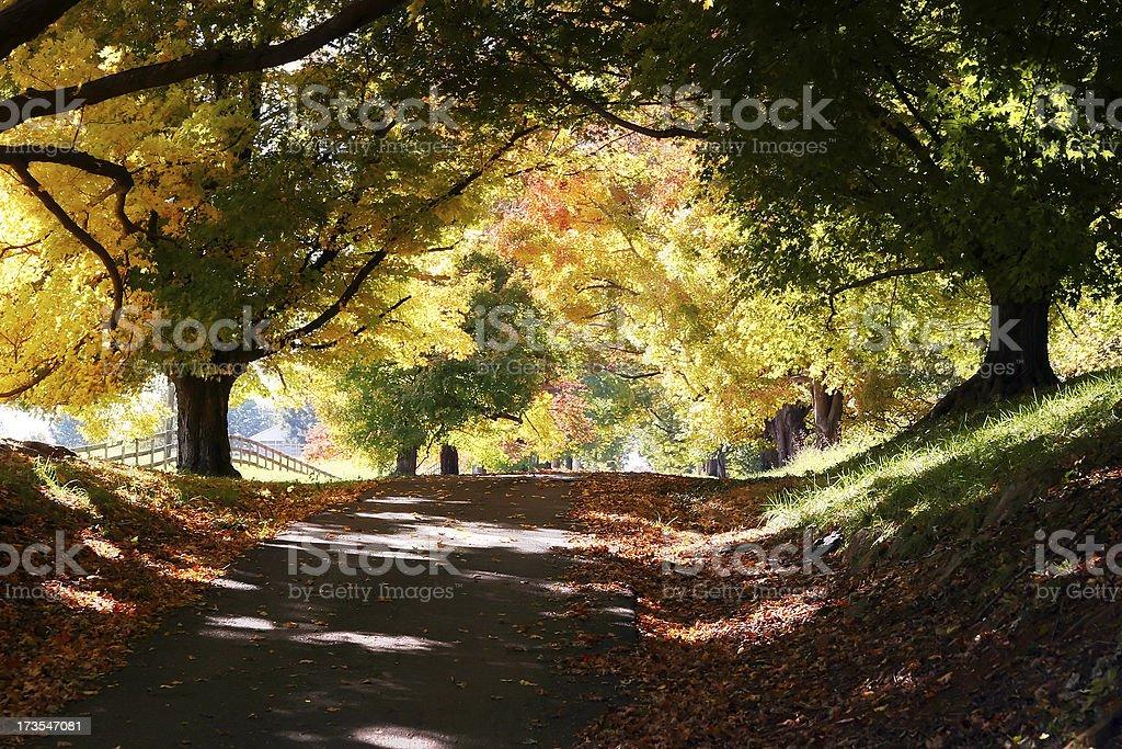 Fall Lane stock photo