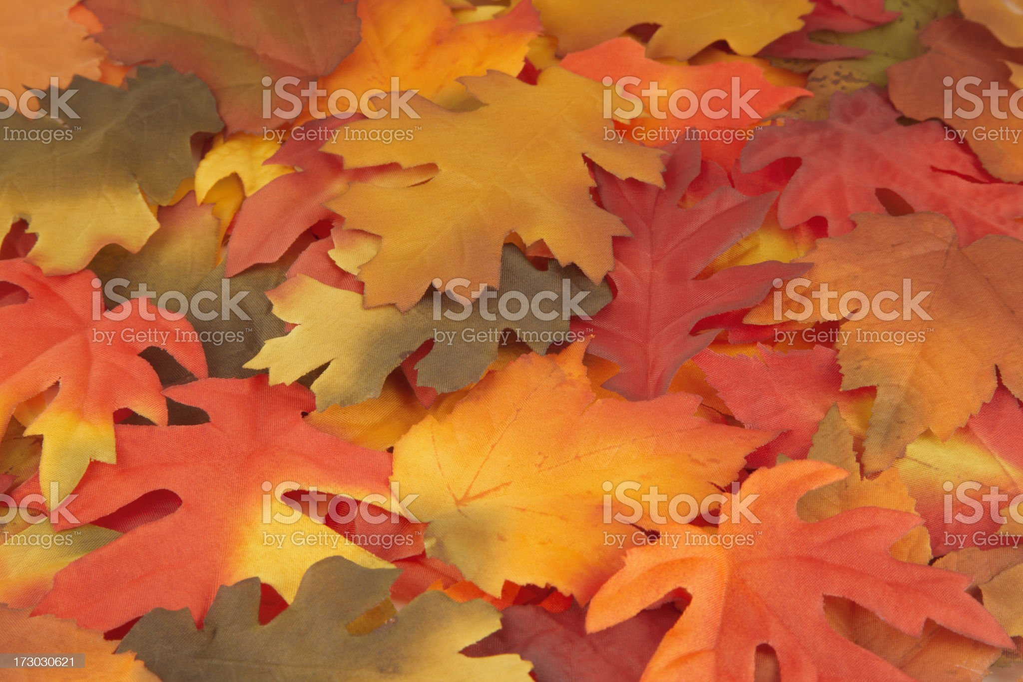 Fall Leaf Arrangement, Autumn, Harvest, Natural Pattern, Colorful Background royalty-free stock photo