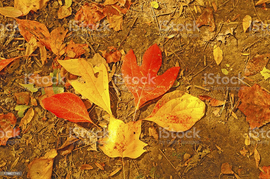 Fall Leaf Bouquet in the Forest stock photo