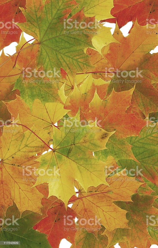 Fall leaf collage royalty-free stock photo