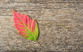 Fall Leaf on Wooden Plank
