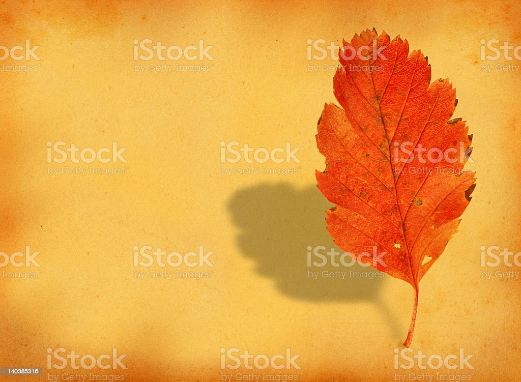 fall leaf with retro copy space royalty-free stock photo