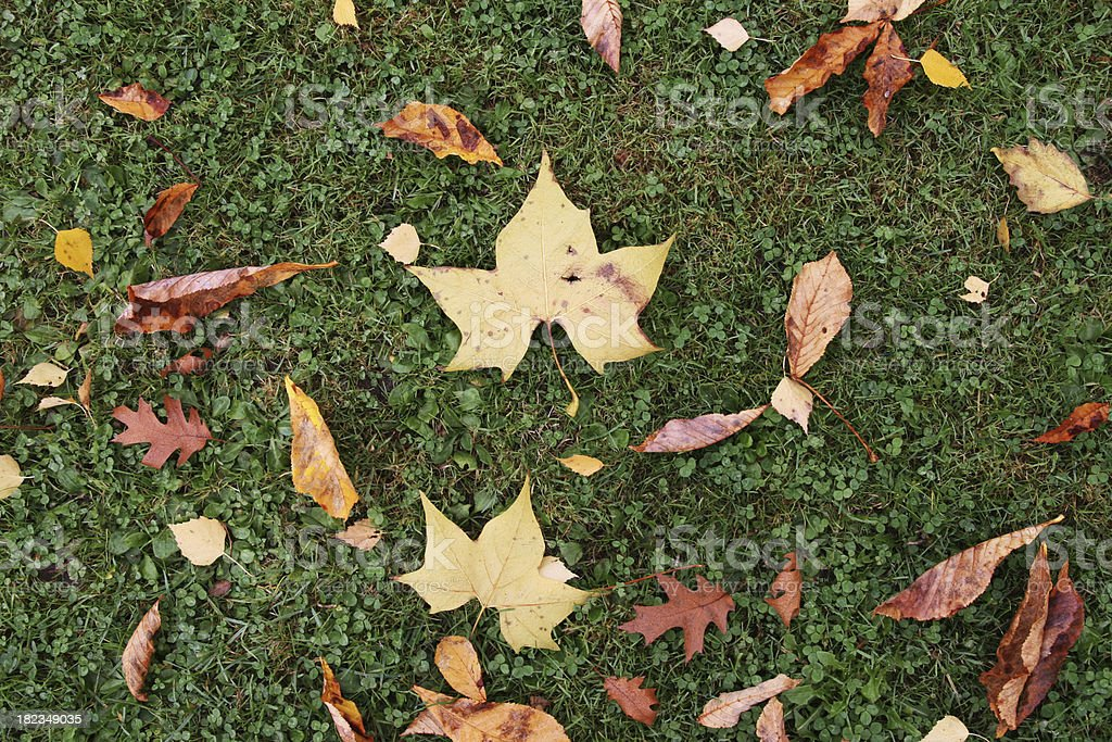 Fall Leafes royalty-free stock photo