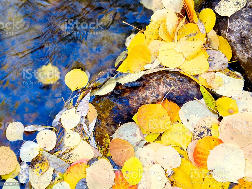 Fall leaves along a stream stock photo
