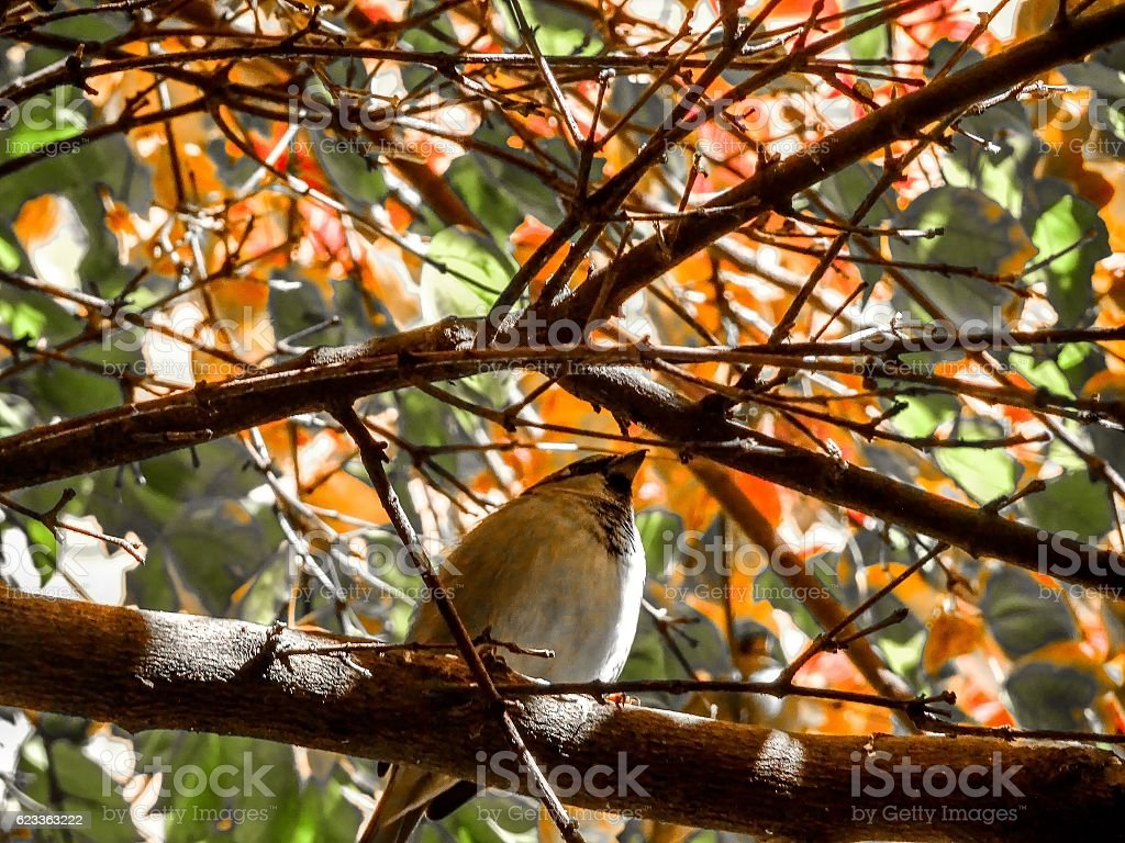 fall leaves and a bird stock photo
