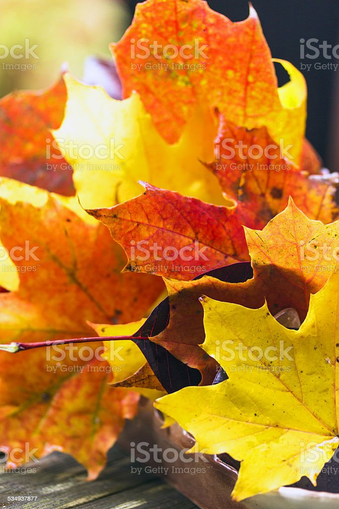 Fall leaves arrangement stock photo