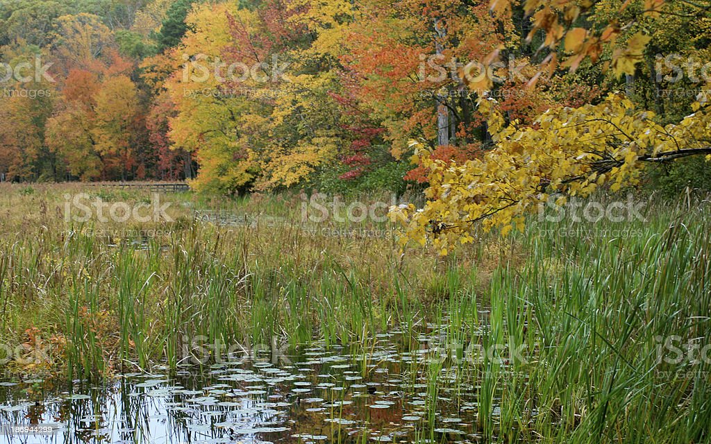 Fall leaves at Pocahontas State Park stock photo