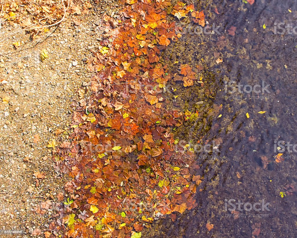 Fall leaves at river's edge stock photo