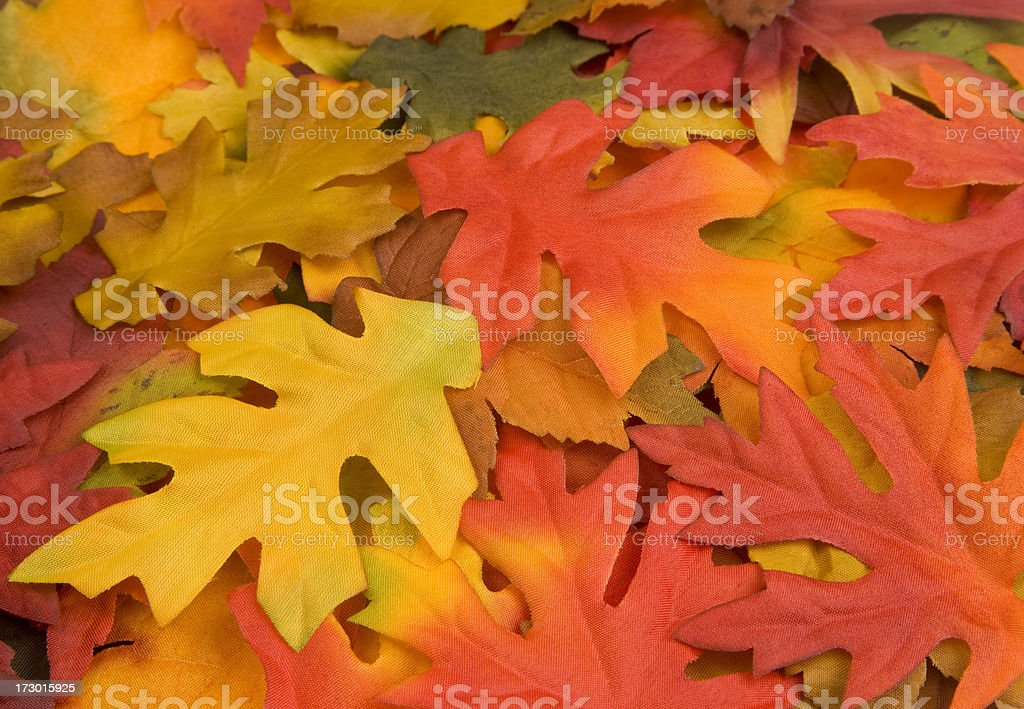 Fall Leaves, Autumn Season, Harvest, Decoration, Vivid-Color, Background, Pattern royalty-free stock photo