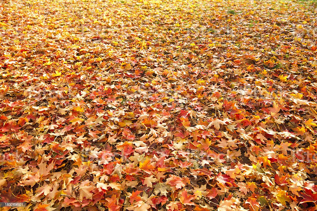 Fall Leaves Background Spread Out Over Grass stock photo