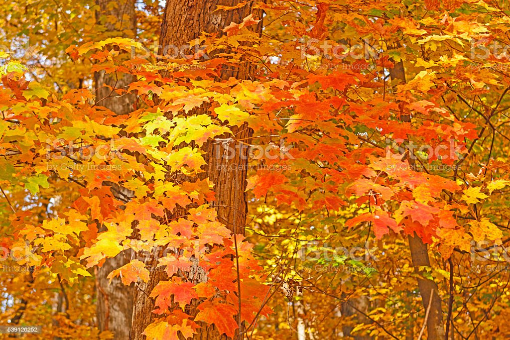 Fall Leaves in a Quiet Forest stock photo