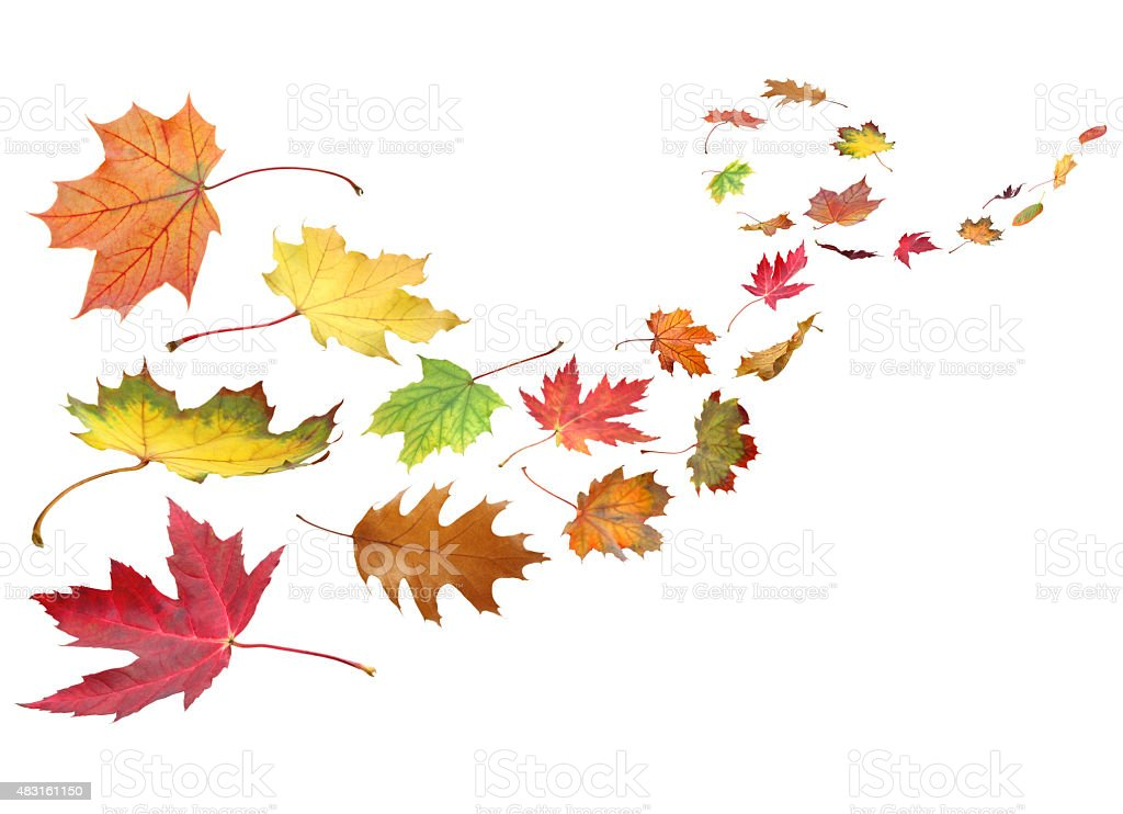 Fall leaves in the wind stock photo