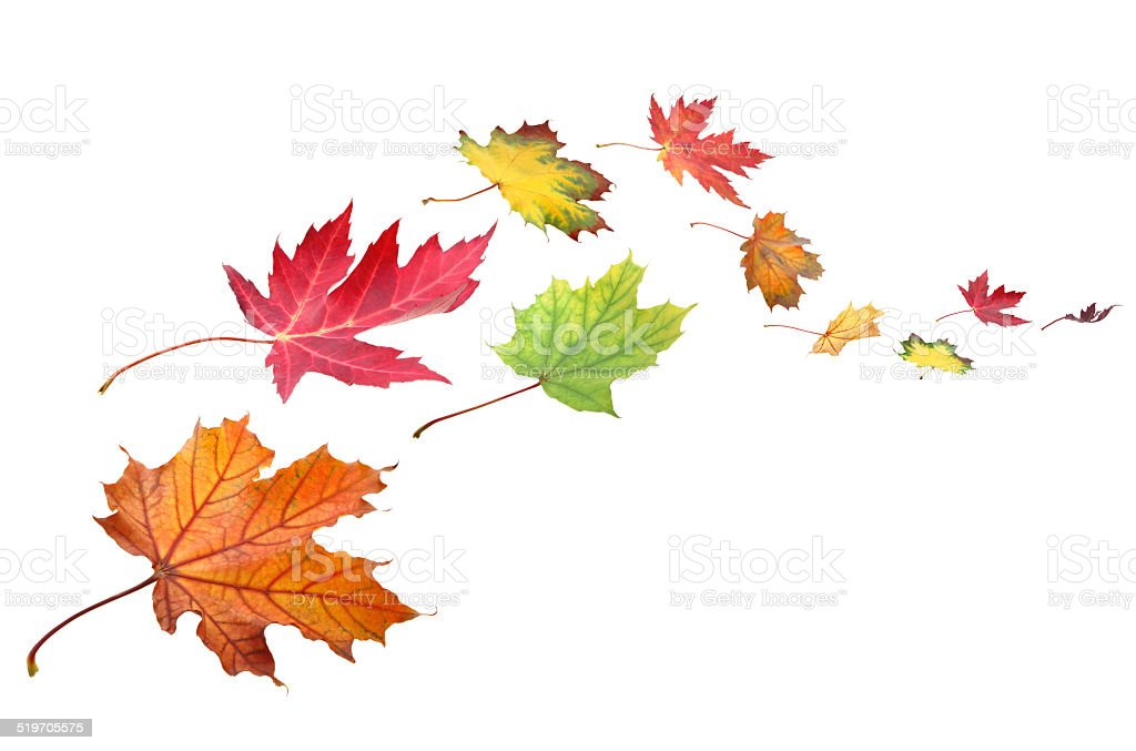Fall leaves in the wind XXXL stock photo