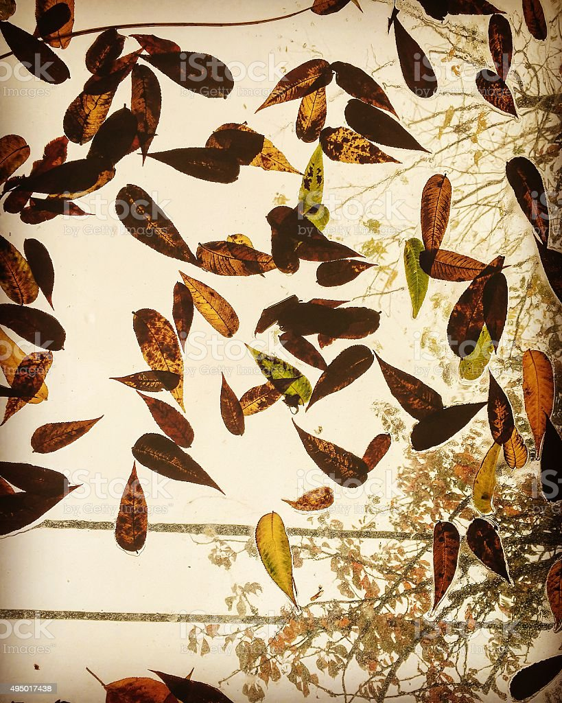 Fall leaves on glass ceiling royalty-free stock photo