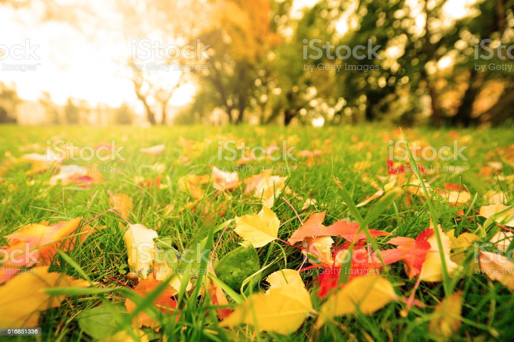 Fall leaves on meadow in autumn stock photo